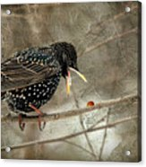 Let's Do Lunch Acrylic Print by Lois Bryan