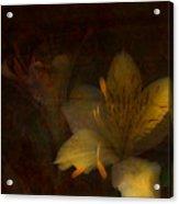 Lilies II Acrylic Print by Bonnie Bruno