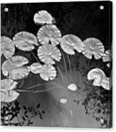 Lilly Pads Fakahtchee Strand Acrylic Print by Jim Dohms