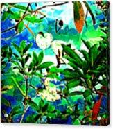 Lilly Pods Acrylic Print by Dale Stillman
