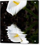 Lily Reflection Acrylic Print by Avalon Fine Art Photography