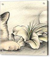 Lily The Birman Acrylic Print by Johanna Pieterman