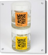 Liquid Explosives Acrylic Print by Paul Rapson