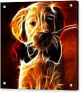 Little Puppy In Love Acrylic Print by Pamela Johnson