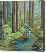 Little Stream In The Woods Acrylic Print by Vidyut Singhal