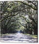 Live Oak Lane In Savannah Acrylic Print by Carol Groenen