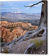Loneliness Acrylic Print by Mike Irwin