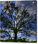 Lonely Tree Acrylic Print by Kevin Hill