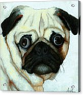 Love At First Sight - Pug Acrylic Print by Linda Apple