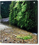 Lush Fern Canyon Acrylic Print by Pierre Leclerc Photography