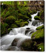 Lush Stream Acrylic Print by Mike Reid
