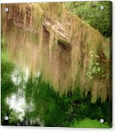Magical Hall Of Mosses - Hoh Rain Forest Olympic National Park Wa Usa Acrylic Print by Christine Till