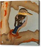 Magnificent Blue-winged Kookaburra Acrylic Print by Brian Leverton