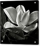 Magnolia In Black And White Acrylic Print by Endre Balogh