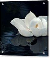 Magnolia Acrylic Print by Kendra Longfellow