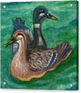 Mallard Ducks Acrylic Print by Anna Folkartanna Maciejewska-Dyba