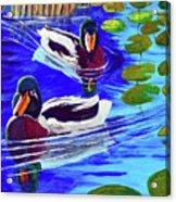 Mallards In The Pads Acrylic Print by Bob Crawford