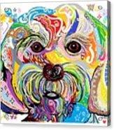 Maltese Puppy Acrylic Print by Eloise Schneider