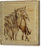 Maple Horse Acrylic Print by Chris Wulff
