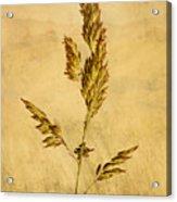 Meadow Grass Acrylic Print by John Edwards