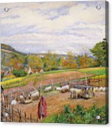Mending The Sheep Pen Acrylic Print by William Henry Millais