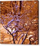 Midnight Snow Acrylic Print by Ellen Andrews