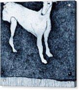 Missing Acrylic Print by Kathryn Siveyer
