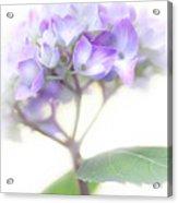 Misty Hydrangea Flower Acrylic Print by Jennie Marie Schell