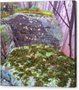 Misty Woodland Scenic Acrylic Print by Thomas R Fletcher