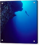 Molokini, Diver In Distance Acrylic Print by Dave Fleetham - Printscapes