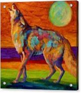 Moon Talk - Coyote Acrylic Print by Marion Rose