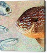 Mooneyes, Sunfish Acrylic Print by James W Johnson
