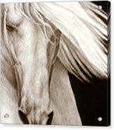 Moonrise Acrylic Print by Pat Erickson
