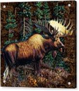 Moose Vignette Acrylic Print by JQ Licensing