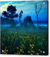 Morning Song Acrylic Print by Phil Koch