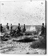 Morocco: Locusts, 1954 Acrylic Print by Granger