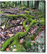 Moss Tree Roots Fall Color Acrylic Print by Thomas R Fletcher