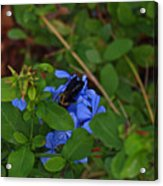 Mother Nature At Work Acrylic Print by James Granberry