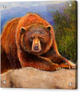 Mountain Bear Acrylic Print by Susan Jenkins
