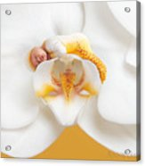 Nakeeta In Moth Orchid Acrylic Print by Anne Geddes