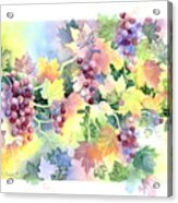 Napa Valley Morning Acrylic Print by Deborah Ronglien