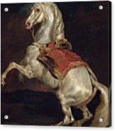 Napoleon's Stallion Tamerlan Acrylic Print by Theodore Gericault