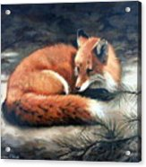 Naptime In The Pine Barrens Acrylic Print by Sandra Chase