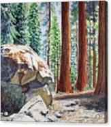 National Park Sequoia Acrylic Print by Irina Sztukowski