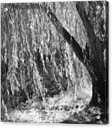 Natural Screen Acrylic Print by Gerlinde Keating - Keating Associates Inc