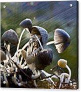 Nature Acrylic Print by Avalon Fine Art Photography