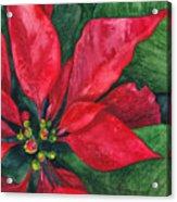 Navidad Acrylic Print by Casey Rasmussen White