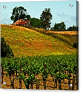 New Vineyard Acrylic Print by Gary Brandes
