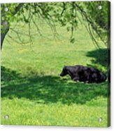 Noon Siesta Acrylic Print by Jan Amiss Photography