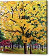 North Savannah Poui Acrylic Print by Karin  Dawn Kelshall- Best